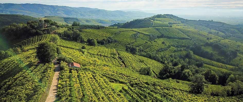 Paesaggio-Volcanic-Wine-Park